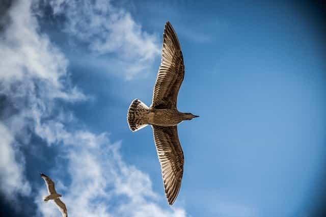 पक्षी कैसे उड़ते हैं